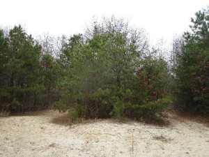 classic pinelands white sand ecosystem - Sapia 12.4.15