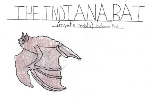 Indiana Bat Drawing - MFenyk