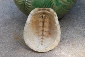 turtleshell-2