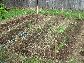 May 29 June 4 The Weekly Garden And Afield Report Lower Raritan