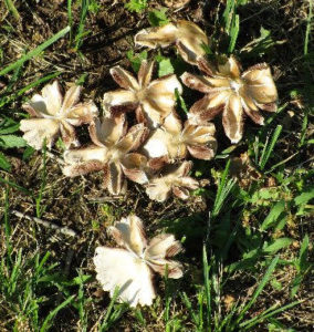 Sapia - 6.26.16 fungi