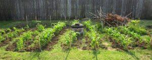 Sapia - 6.26.16 garden