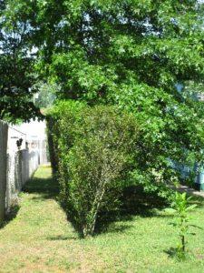 sapia - around the yard