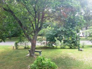 tree + yard