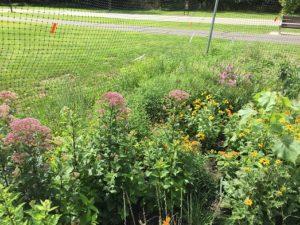 brielle - pollinator garden