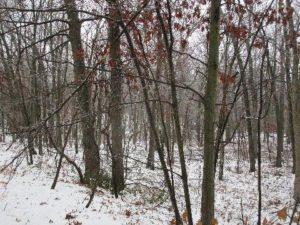Sapia - 12.17.16 snowfall in Jamesburg Park